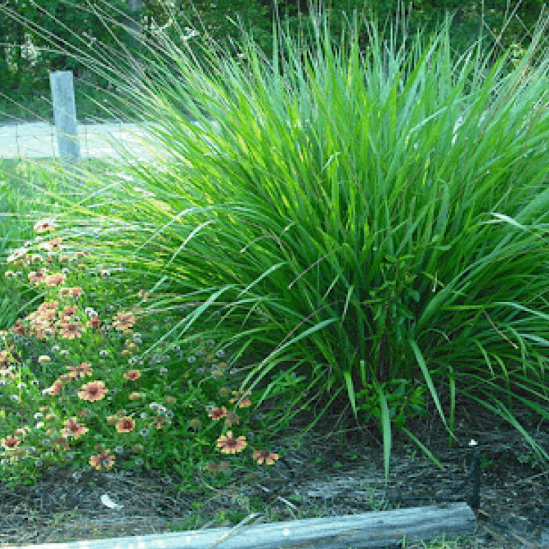 Pixellated image of bright green Fakahatchee grass next to daisies along a median.