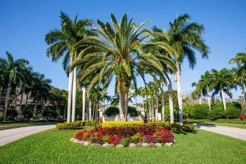 Golden Golf Services designed this large, colorful planter encircling the palm trees at the entrance of Legends Golf Country Club.