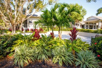 Professional landscape beds at The Forest Country Club features red dwarf ixora, flax lily and assorted copperleaf plants.