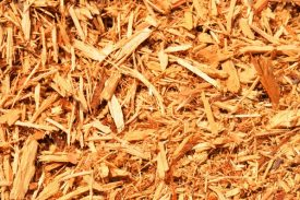 This natural cypress mulch reflects the bright Florida sunlight.